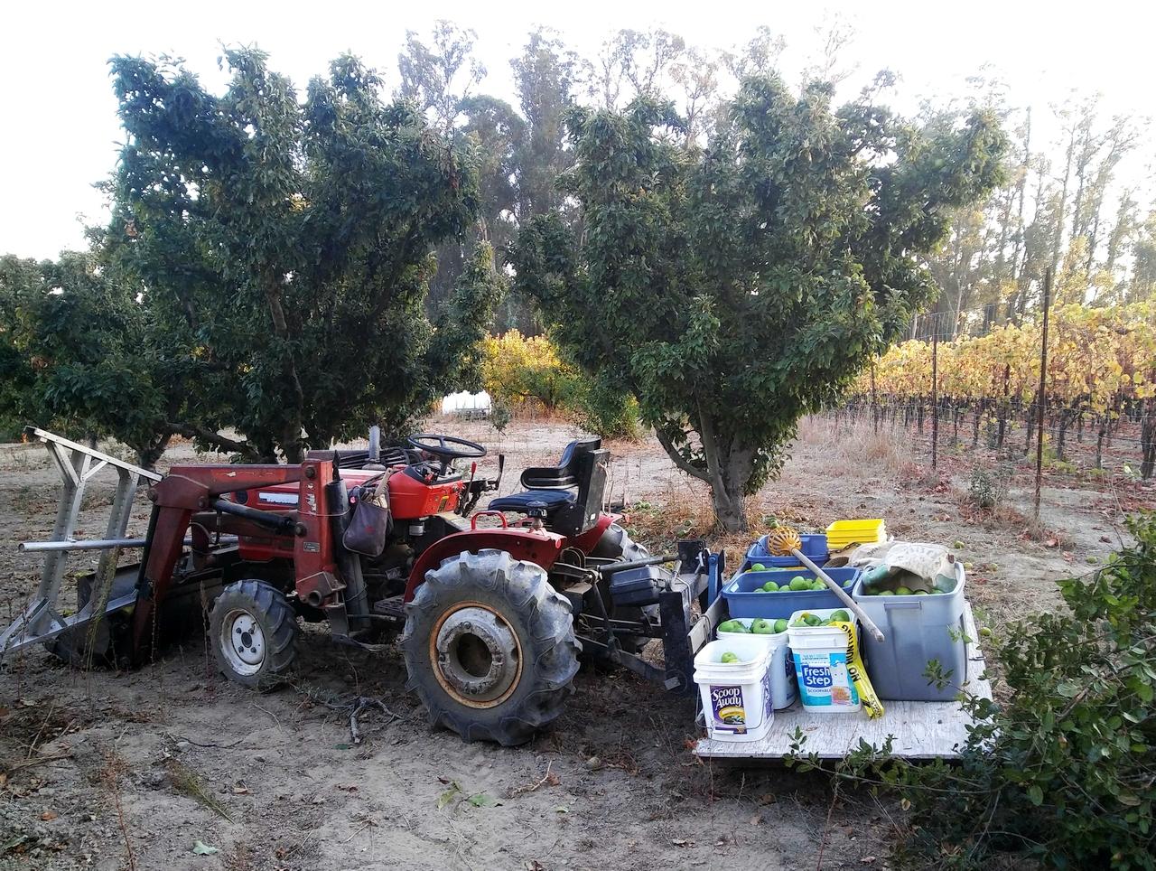 20191106_163749rym186d-harvestgrannies-jpg.633196