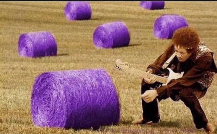 field-guitar.jpeg