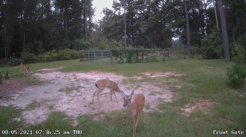 front=gate-deer.jpg