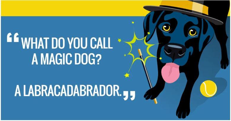 Magic Dog.JPG