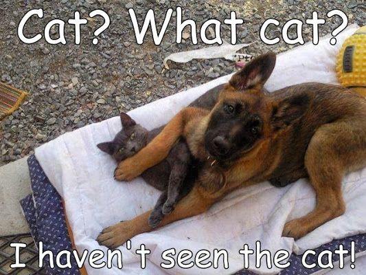 what cat.jpg