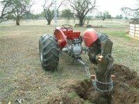 MF135 stump1 (1).JPG