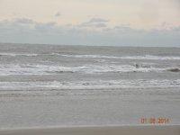 beach, trees, roses 061.JPG