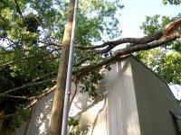 4-27-16 Limbs on Roof.jpg