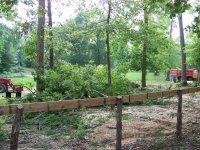 4-29-16 Huge Oak Missed Fence.jpg