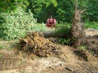 4-29-16 Huge Uprooted Oak Down.jpg