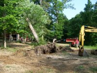 4-29-16 Dragging And Pulling Oak Over.jpg