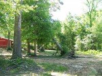 4-28-16 Huge Oak Tree Uprooted.jpg