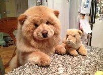 dog-look-like-teddy-bear-1__605.jpg