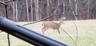 Close Deer.jpg